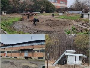 Развъдникът за питбули на Иван Иванов -  какво се случва зад оградата?