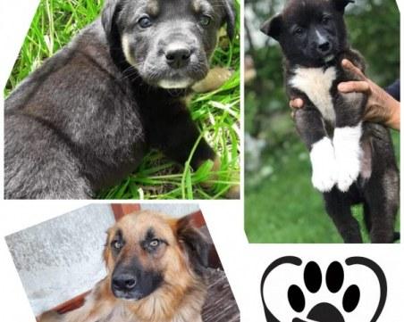 Коледен онлайн базар помага на животните без дом в Асеновград