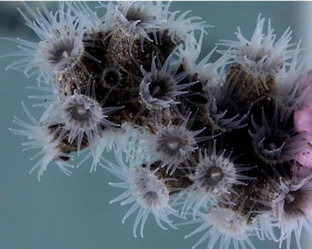 Учени направиха атлантическо откритие: 12 нови вида, криещи се в дълбините