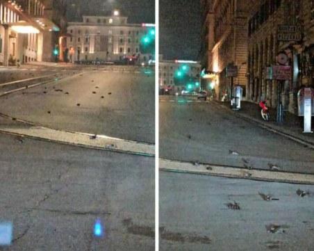 Сцена като от хорър филм в Рим! Хиляди трупове на птици покриха улиците
