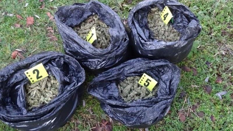 Четирима от Раковски в ареста след стрелбата за 14 кг марихуана