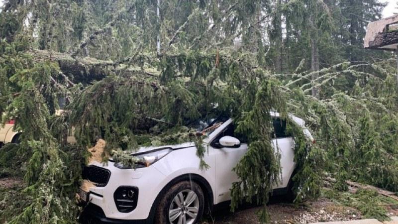 Дърво премаза пет коли в Пампорово, затвориха ски зоната