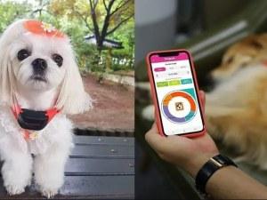 Създадоха каишка, която превежда кучешкия лай