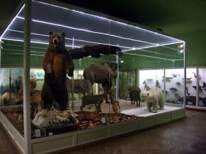 Природонаучният музей подарява минерал на всеки малчуган до 7-годишна възраст