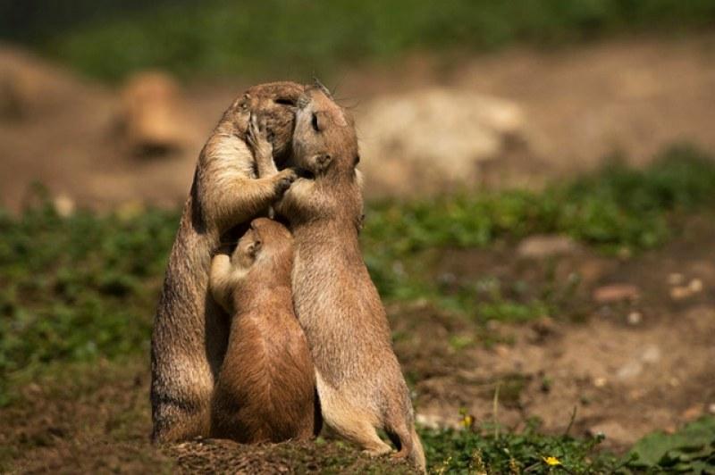 На този ден: Отбелязваме Международния ден на прегръдката