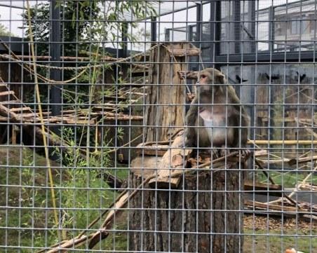 Маймуна от столичния зоопарк пострада сериозно заради подхвърлена храна