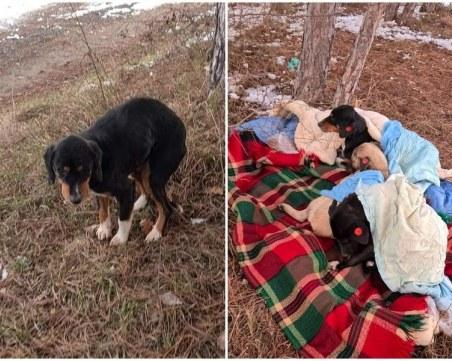 Кастрирани, упоени и изхвърлени – алармираха за нечовешко отношение към кучета от приют