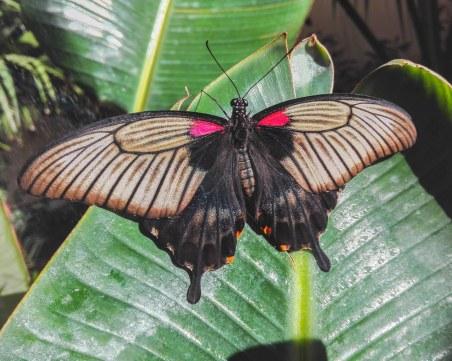 Пеперуден уикенд в Регионален природонаучен музей