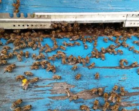Агенцията по храните започват масови проверки за състоянието на пчелните семейства