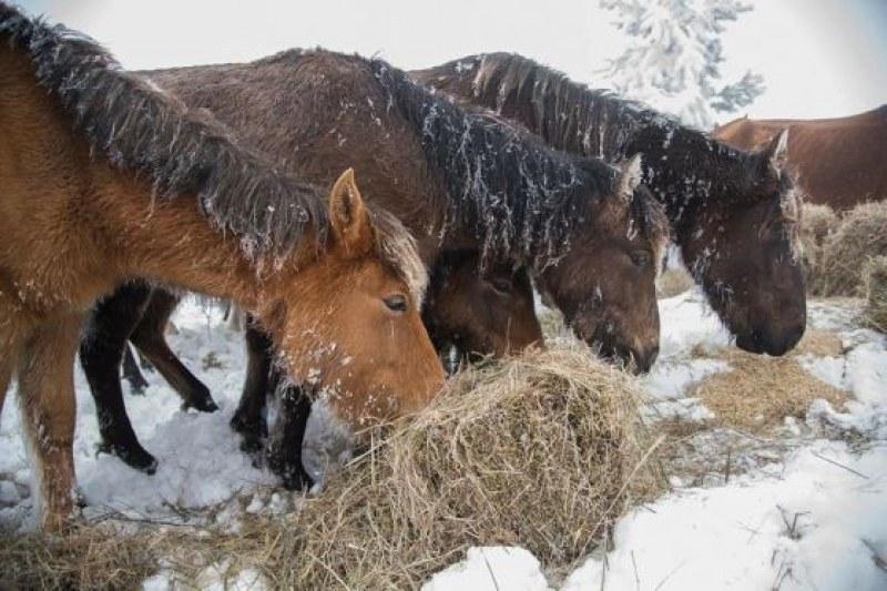 Глобиха собственика на изоставените в Осоговската планина коне