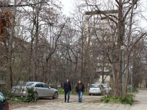 След сигнали от граждани: Разчистват опасни клони в Пловдив