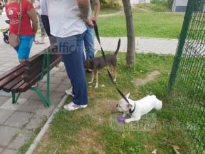 Започва кампания за подпомагане кастрацията на домашни кучета и котки в Пловдив