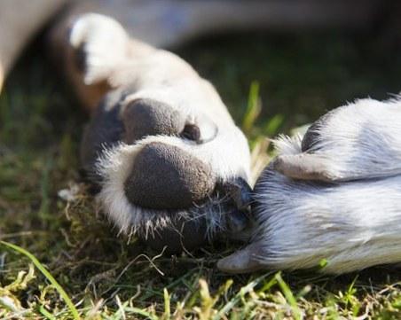 Жестокост! Убиха куче край Карлово, издирват извършителя
