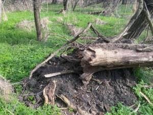 Лаута като Мраколес! Десетки паднали дървета и клони в един от най- красивите пловдивски паркове