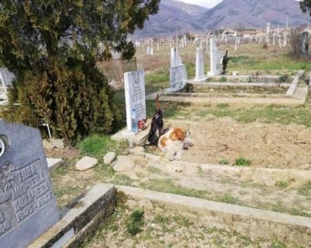 Българският Хачико е бездомно куче, хранено от починалия Кольо