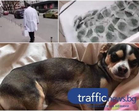 Куче в критично състояние заради отрова за гризачи, пръсната в Кършияка