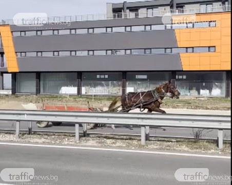 Безпризорен кон препуска в насрещното платно на Асеновградско шосе