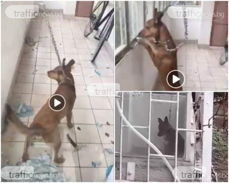 Полиция издири собственика на жестоко завързаното кученце, разпитват го в полицията