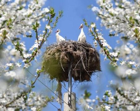 Снимка на щъркелово гнездо в пловдивско село стана хит в мрежата