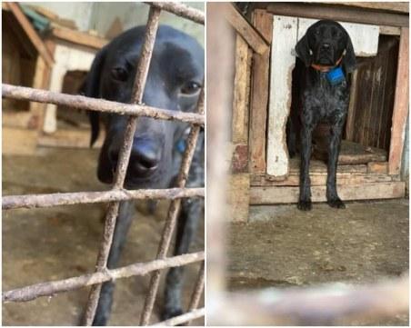 Пловдивчани сигнализираха за бедстващо куче, БАБХ и полицията инспектираха мястото