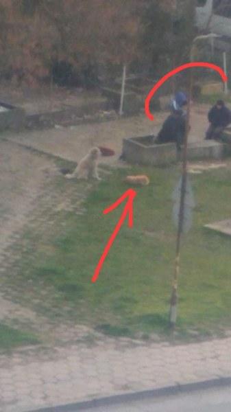 Пребито куче лежи в локва кръв, до него мъже ядат и пият