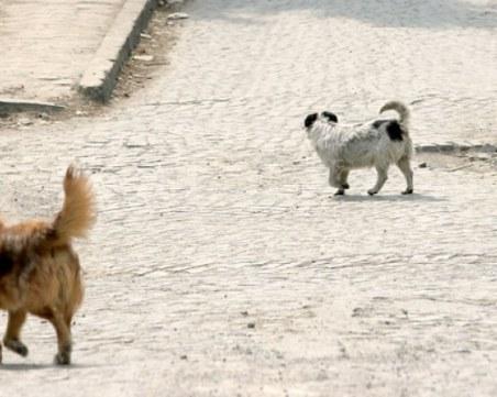 Глутница агресивни кучета скача на хора и животни в Смирненски