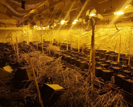 Пловдивски криминалисти разбиха две лаборатории за марихуана