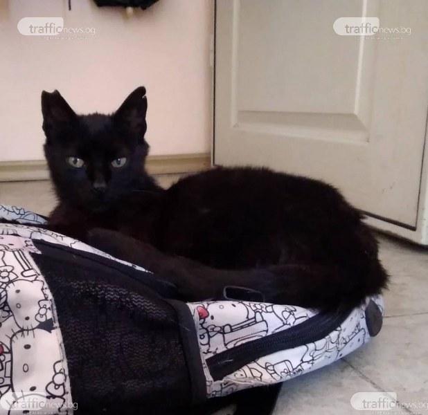 Маца се загуби в Кършияка, виждали ли сте я?