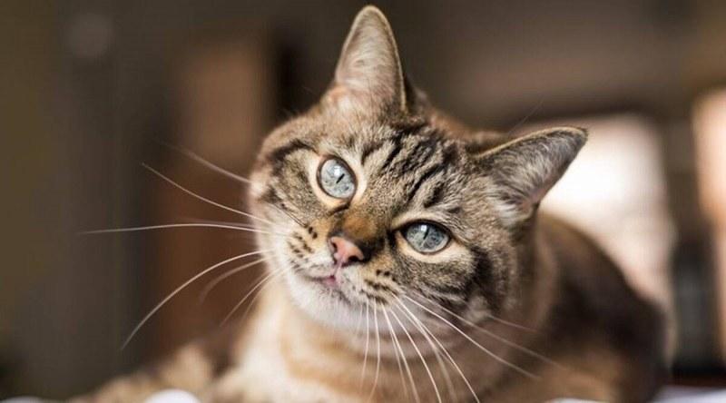 Любопитни факти за котката: тя