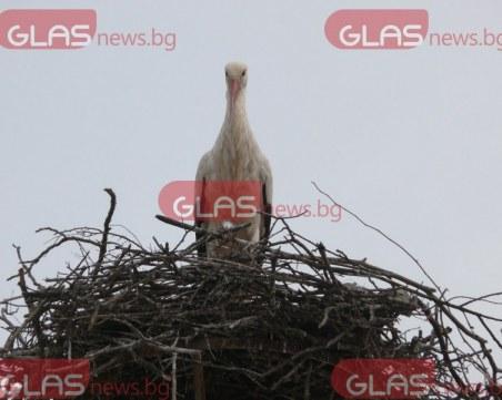 Най-известното щъркелово гнездо е в България