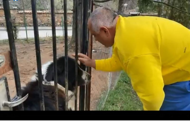 Кучето Борко първо посрещна Борисов в Бояна