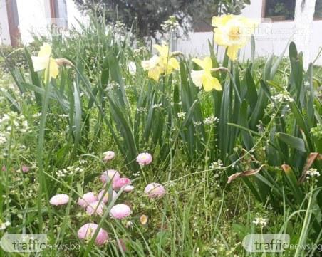 Цветница е – празник на цветята, надеждата и любовта