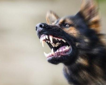 Куче нахапа 10-годишно дете в центъра на Враца