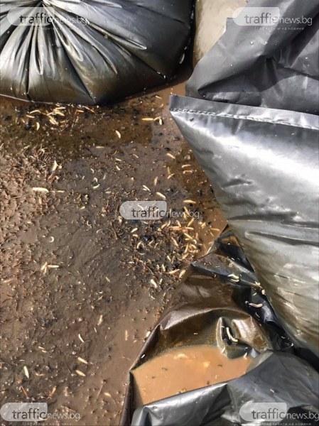 Смрад в пловдивско село! Чували с животински остатъци изхвърлени край гробищата