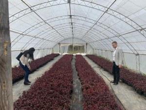 Над 2 000 000 цветя ще краят Пловдив през лятото