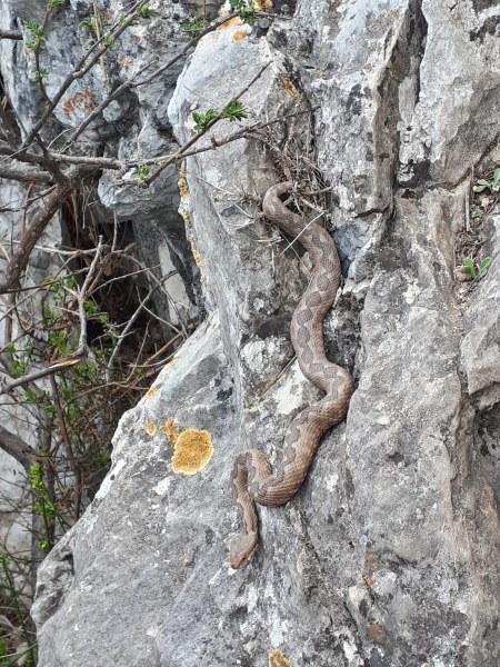 Пепелянки изпълзяха в равнината край Пловдив - какво да правим, ако ги срещнем?