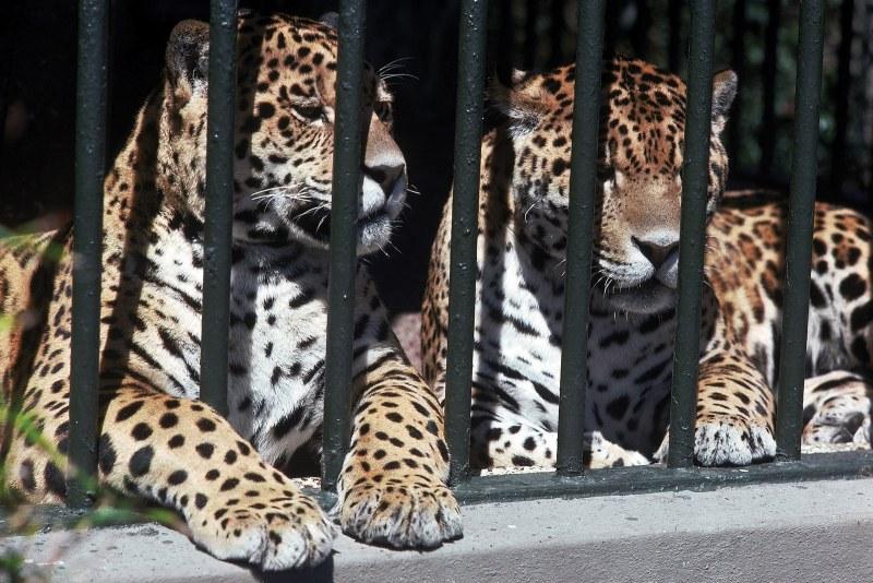 МОСВ ще оказва съдействие за решаването на проблемите на зоопарковете