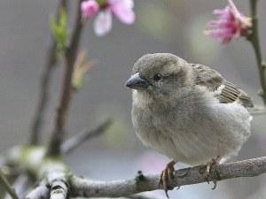Повече от 50 милиарда птици летят по света, повечето са редки видове
