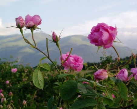 Хиляди се събраха на Празника на розата в Казанлък