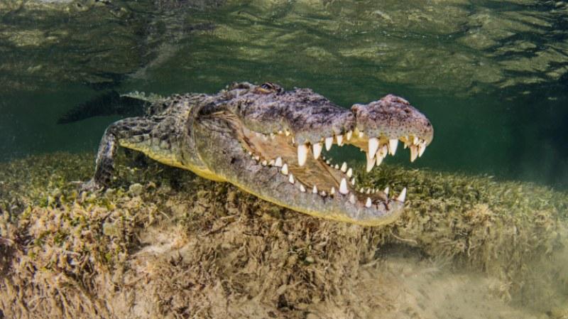 Две британки са ранени при нападение от крокодил, докато плували в лагуна