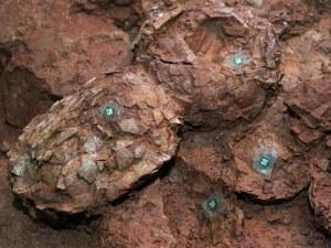 Митничари заловиха яйце от динозавър в Бергамо