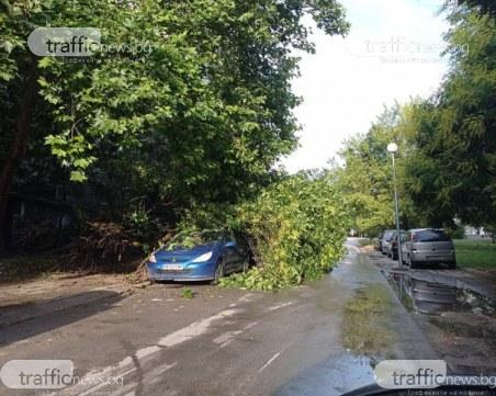 Дърво падна върху коли в Кючука