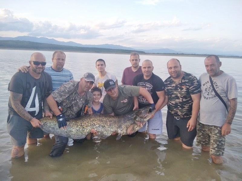 Спасиха 50-килограмов сом, хора от цяла България събраха 450 лв. за три часа