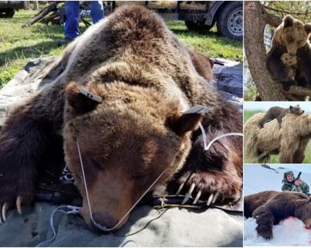 Няма мечка, няма проблем? Или как се саморазправяме с природата чрез смъртни присъди
