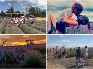 Лавандулинг край Пловдив! Лавандулово поле се превърна в хитово място за фотосесии