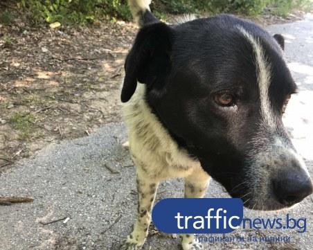 Безпризорно куче 10-ти ден чака стопаните си край пловдивски път