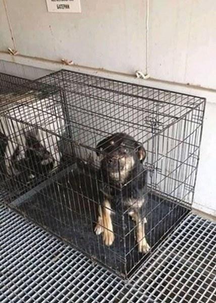 Жестоко! Затвориха кучета в клетки и ги изоставиха в контейнер в жегата