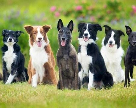 Нечовешко! Изхвърлиха 40 кучета на пътя за връх Перелик