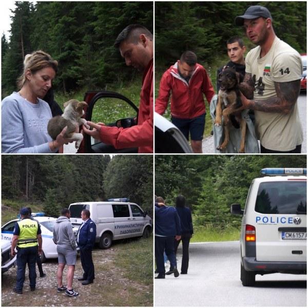 Нехуманно и жестоко! Избиха повечето от захвърлените кучета край Смолян