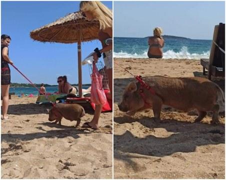 Нова мода? На море с прасе на култов плаж на Черноморието